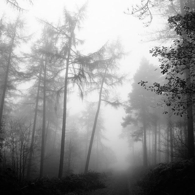 El miedo: el velo que desdibuja el camino hacia los sueños